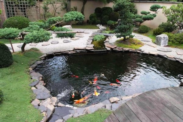 How To Identify Pond Fish Diseases On Time