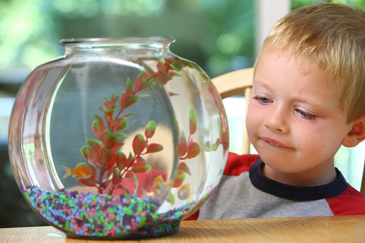 What do you need for a starter fish tank?