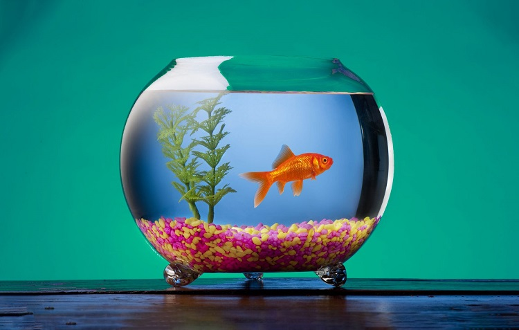 How much does a starter fish tank cost?