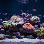 Fish Compatibility: Not All Fish Are Compatible