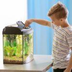 Best Starter Fish Tanks 2020: Best Aquarium For Beginners