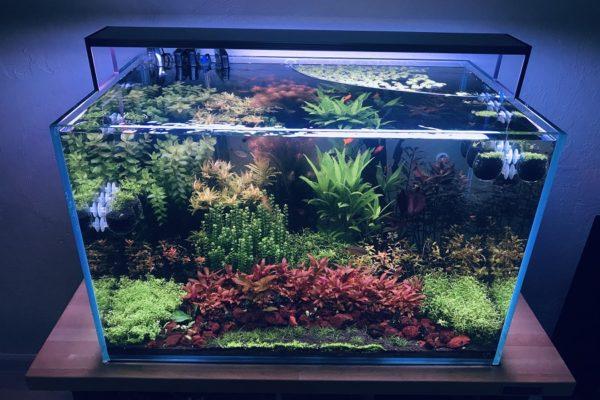Floating Aquarium Plants Review