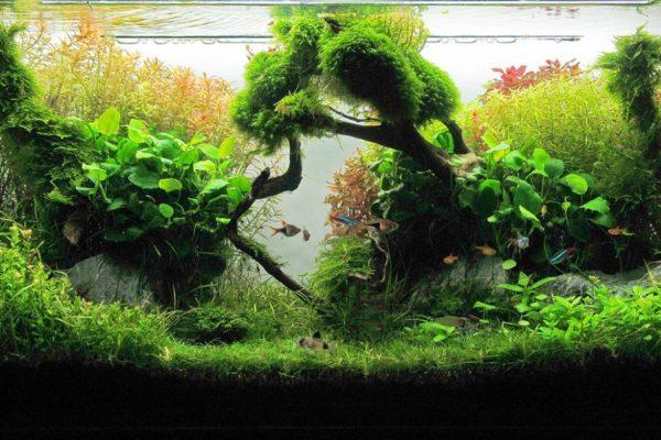Aquarium Plant Fertilizers Reviewed