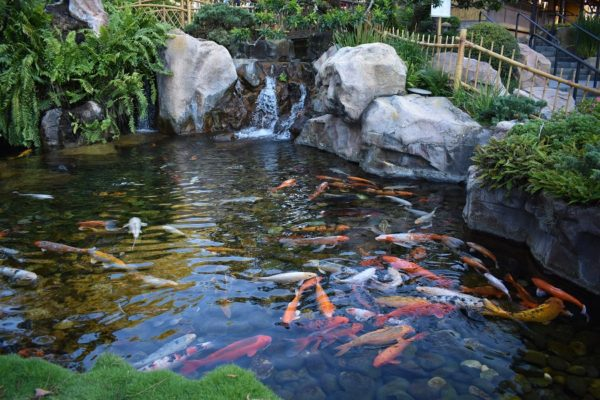 Koi Pond Filters Reviewed