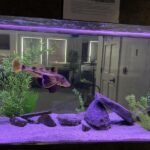 Brackish Water Aquarium