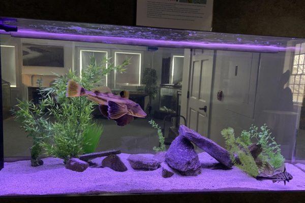 Brackish Water Aquarium