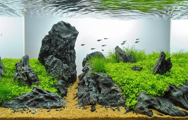 clean water in aquarium