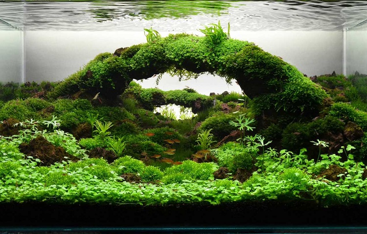 purified water in aquarium