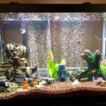 Best Self Cleaning Fish Tank for 2021