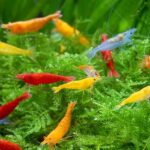 8 Facts About Aquarium Shrimp