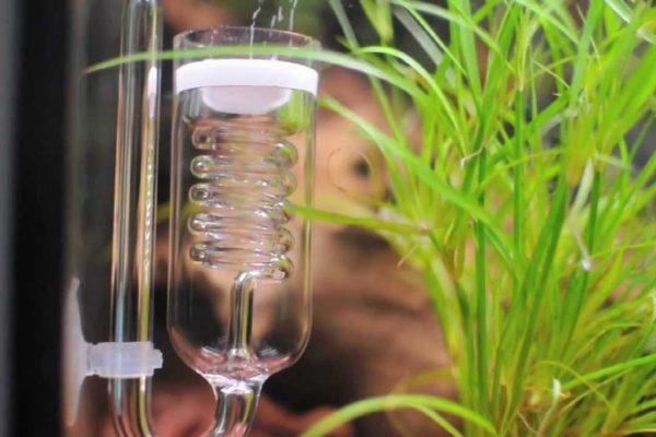 Best CO2 Diffuser for Your Aquarium