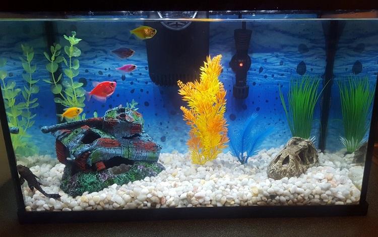 five gallon tank