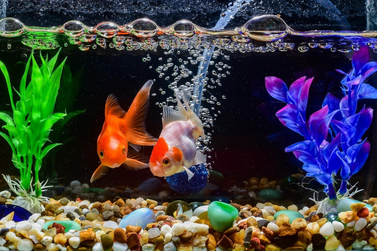 Canister Fish Tank Filter Review
