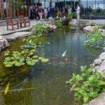 Pond Pumps Review