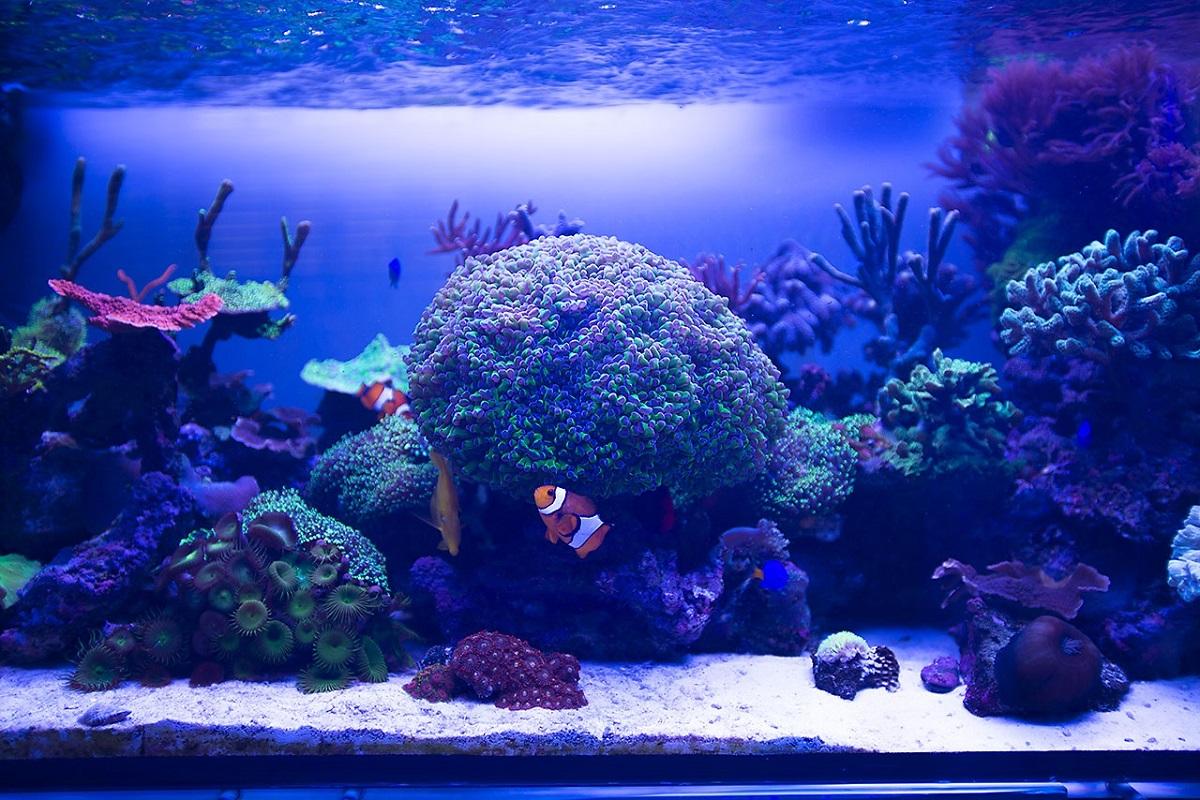 fish per water ratio