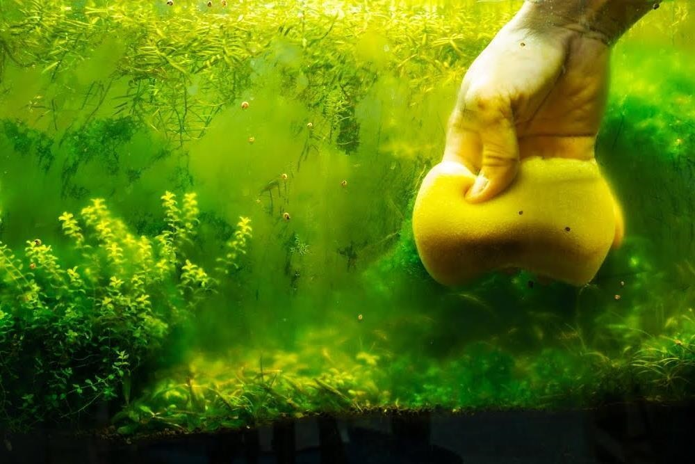 cleaning mold in fish tank