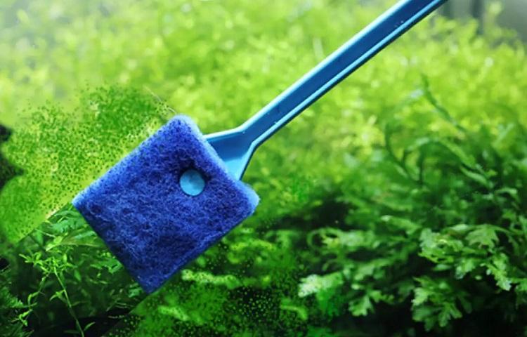 cleaning algae