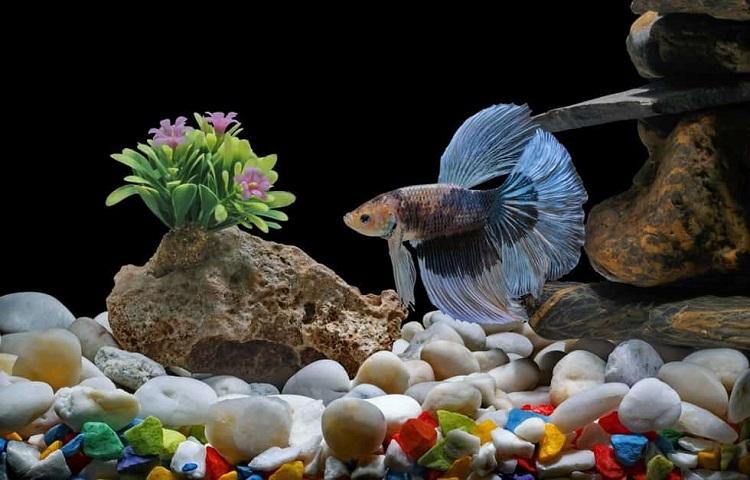 tank design for betta fish