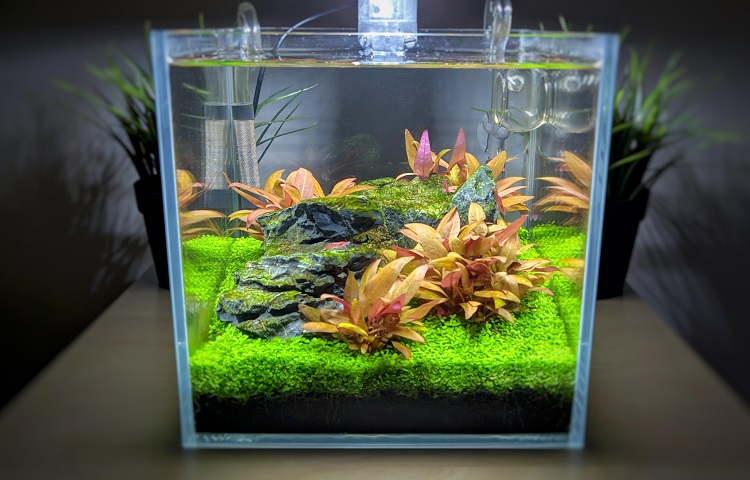 two gallons tank