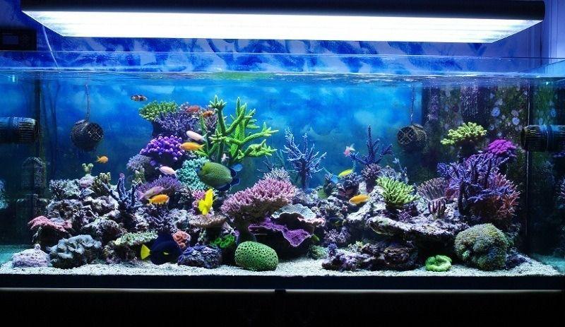 Soften Aquarium Water
