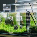 Nano aquarium tanks reviews