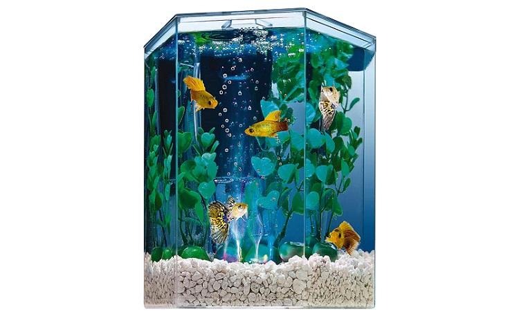 Tetra Bubbling LED Aquarium Kit Review