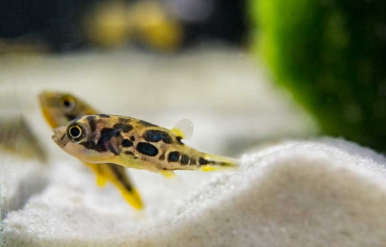 Puffer Tank Conditions